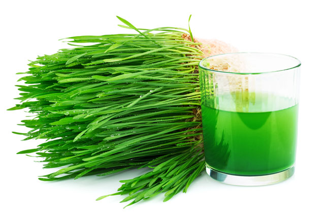 A Brief History of Wheatgrass